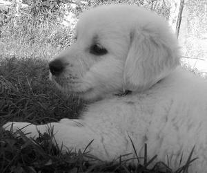 animal, animals, and black and white image