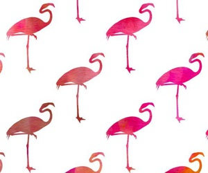background, wallpaper, and flamingo image