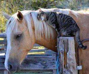 horse, cat, and animal image