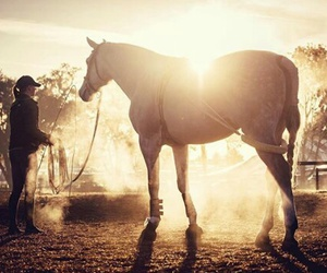 beautiful, equine, and sun image