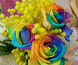 arcobaleno, flower, and mimosa image