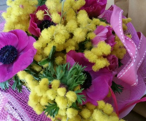 flower, mimosa, and pink image
