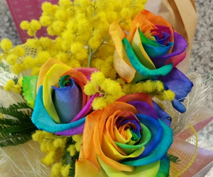 amazing, flowers, and mimose image