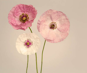 fine art, poppies, and flower image