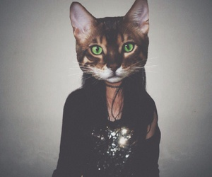 background, blogger, and cat image