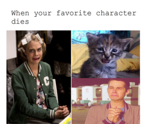 animal, teen wolf, and cat image