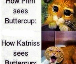 the hunger games, buttercup, and prim image