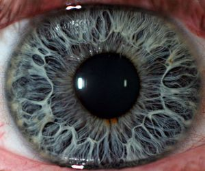eye, iris, and pupil image