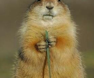 flowers, funny, and animal image