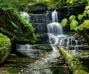 green, hd, and nature image