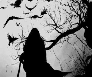 dark, bird, and crow image