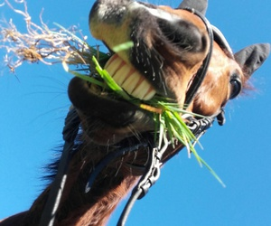 crazy, nature, and horse image