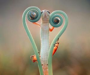nature, animal, and heart image
