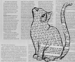 cat, daily, and diario image