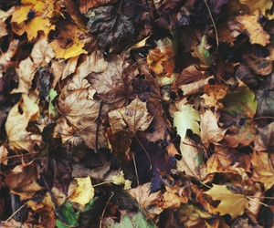 autumn, background, and leaves image
