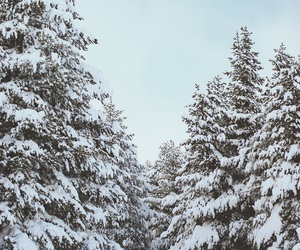 snow, christmas, and trees image