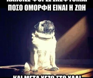 dog, funny quotes, and greek quotes image