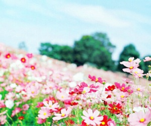 flowers, spring, and summer image