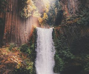 forest, waterfall, and nature image