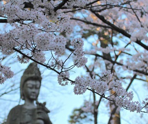 beautiful and cherry blossoms image