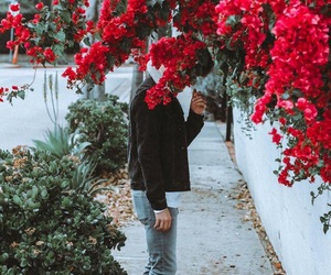 flowers, connor franta, and photography image