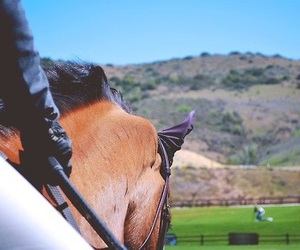horse, equestrian, and equine image
