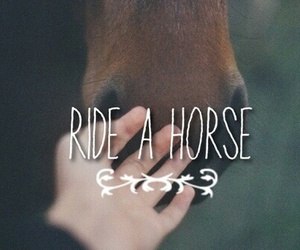 horse and ride image