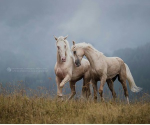 animals, beauty, and horse image