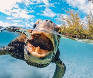 animal, turtle, and summer image