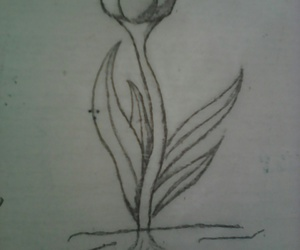drawing and tulip image