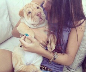 adorable, shar pei, and love image
