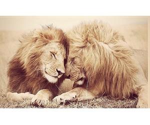 amazing, animals, and cute image