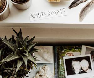 amsterdam, interior, and cactus image