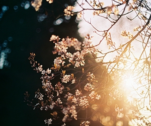 blossom, flowers, and Lazy image