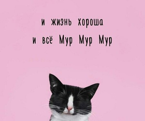 blackandwhite, catty, and meow image