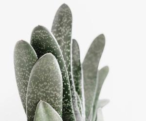 minimalism, plants, and aesthetic image