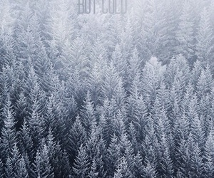 background, blue, and forest image