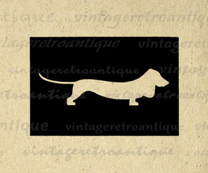 dachshund, digital image, and dog image