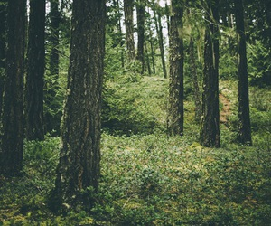 beautiful, forest, and nature image