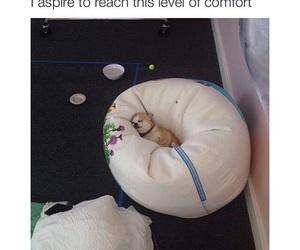 dog, comfort, and funny image