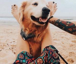 dog, beach, and beautiful image