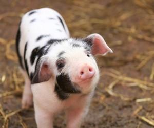 animals, veganism, and vegan image