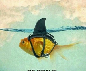 brave, cool, and fish image