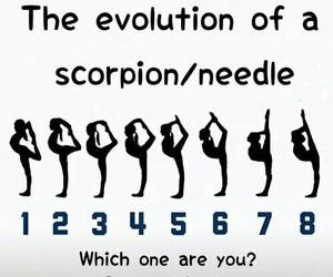 needle, scorpion, and evolution image