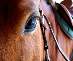 eyes, horse, and baie image