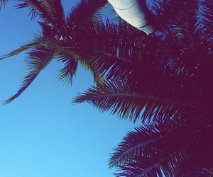 iphone, palms, and sky image