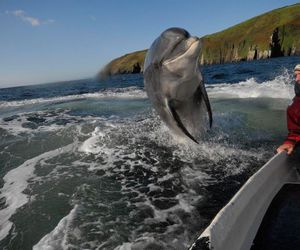 awesome, dolphin, and jumping image