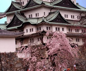 pink and japan image