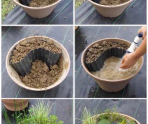 diy, garden, and plants image