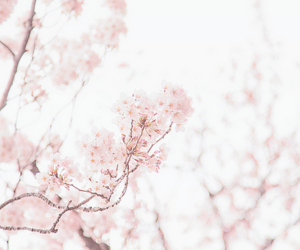 delicate, floral, and flowers image